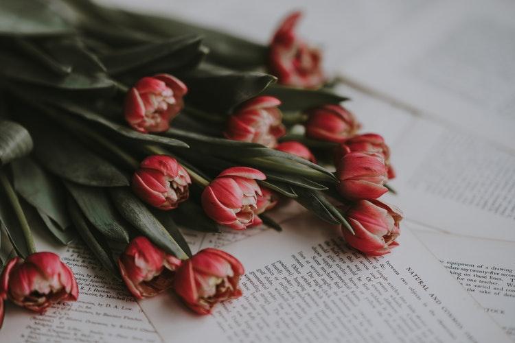 vino i mastilo-tulips